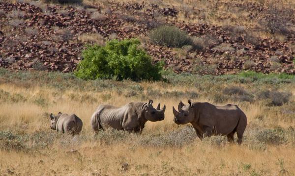 Conservationist-s-Safari