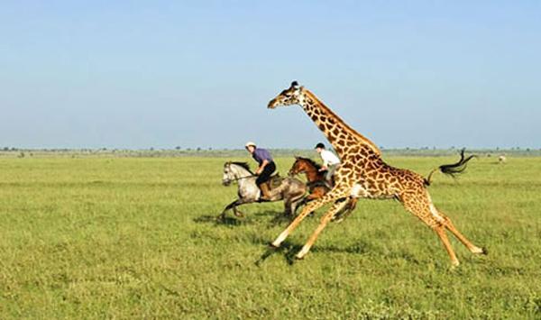 Safari-on-Horseback