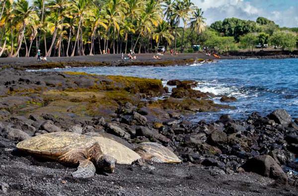 punaluu-big-island-hawaii