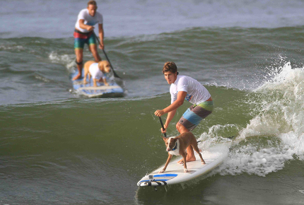 Nothing_to_see_here_just_a_dog_riding_a_surfboard