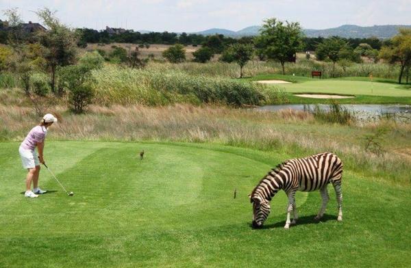 Golfers-Safari