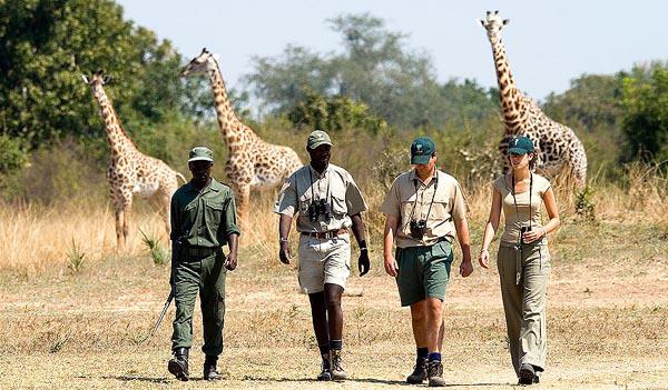Safari-on-Foot