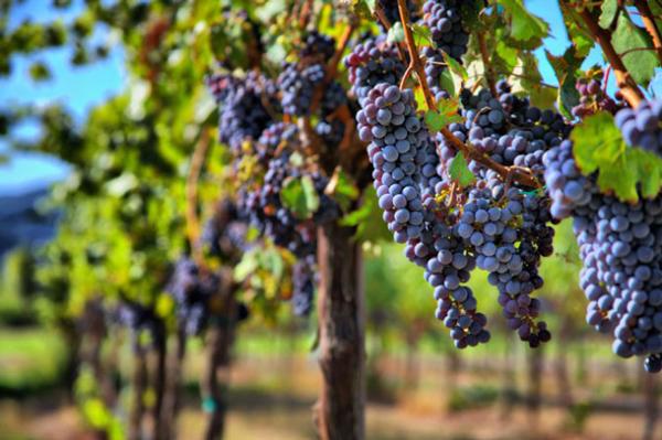 Tour-the-Cape-Winelands