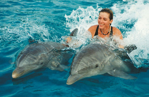 swimming-with-dolphins-costa-rica